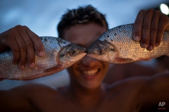 A young vendor holds a couple fish to his face as he jokingly poses for a photo at the Panair fish market in Manaus, Brazil, Saturday, May 24, 2014. Manaus is one of the host cities for the 2014 World Cup in Brazil. (AP Photo/Felipe Dana)
