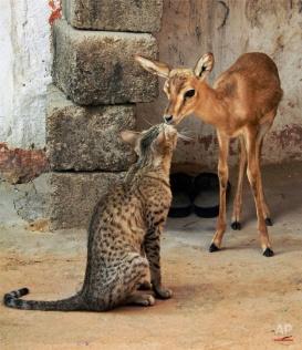 Unusual Animal Combos
