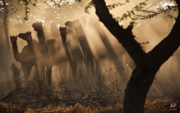 Photos of the Day: October 28, 2014