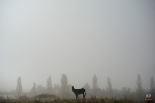 A donkey stands in a field as fog covers the landscape on an autumn sunrise in Ezquiroz, near to Pamplona northern Spain, Tuesday, Nov. 18, 2014. The autumn season paints the landscape with brilliant colors and makes a special atmosphere with the fog. (AP Photo/Alvaro Barrientos)