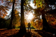 The sun lights up autumn colors in the trees while a man performs Tai Chi exercises in Amsterdam's Vondelpark, Netherlands, Monday, Nov. 10, 2014. (AP Photo/Peter Dejong)