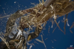 Yemeni farmers winnow wheat with the wind to separate grains from impurities during the harvest season on the outskirts of Sanaa, Yemen, Saturday, Nov. 15, 2014. (AP Photo/Hani Mohammed)