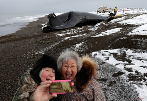 In this Oct. 7, 2014, photo, Molly Pederson, right, and daughter Laura Patkotak take a picture as a bowhead whale caught by Alaska Native subsistence hunters from their family is brought ashore in Barrow, Alaska. Whaling is a community event in Barrow, as family members and town residents race to the beach to congratulate the hunters and help to butcher the catch. (AP Photo/Gregory Bull)