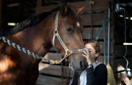 """Ava Exelbirt hugs one of the remaining horses at the Masterpiece Equestrian Center in Davie, Fla., Tuesday, Dec. 16, 2014. Ava lost the horse she rode to poisoned feed on Monday. There's nothing that can be done to save 18 poisoned horses at a Florida equestrian center, so their young riders are holding """"spa days"""" to brush their manes and tails, paint their hooves, feed them hay and pet their noses to keep the animals comfortable in their last days. Four horses at Masterpiece Equestrian Center have died since October because of contaminated feed, and the owners of the rest are struggling to accept the approaching deaths of the others. (AP Photo/J Pat Carter)"""