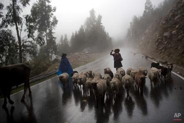 Women herd their sheep to their village in Huaraz, Peru, Wednesday, Dec. 3, 2014. (AP Photo/Rodrigo Abd)