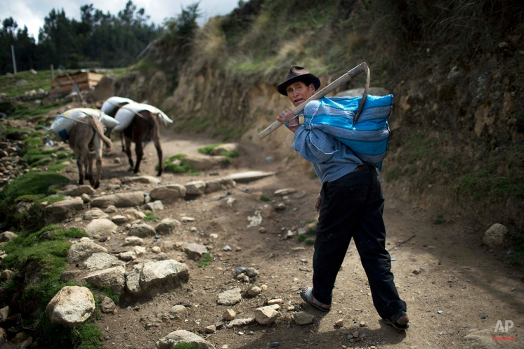 Simon Bolivar, 63, walks towards his plot of land where he grows corn and potatoes in Huaraz, Peru, Wednesday, Dec. 3, 2014. Villagers claim that due to global warming, each year there are more frost out of season and their crops are affected. (AP Photo/Rodrigo Abd)