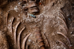 In this photo taken on Dec. 16, 2014, a bullet shell stands on top of human bones found during an excavation searching for the remains of those killed by their political ideology during and after the Spanish civil war at a mass grave at the cemetery of Puerto Real, Spain. (AP Photo/Daniel Ochoa de Olza)