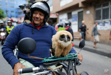 In this Aug. 30, 2014 photo, a man stops to pose for a portrait on his motorcycle, carrying his pet owl and dog, as he arrives to the area where Brazilian Socialist Party presidential candidate, Marina Silva, will campaign in the Rocinha slum in Rio de Janeiro Brazil. (AP Photo/Leo Correa)