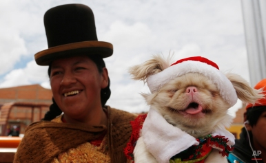 An Aymara indigenous woman carries her pet to a Christmas costume contest for dogs in El Alto, Bolivia, Saturday, Dec. 20, 2014. About 50 dogs participated in the event organized by zoonosis. (AP Photo/Juan Karita)