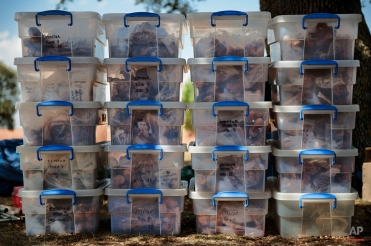 In this photo taken on July 26, 2014, skeletons and evidence are packed in plastic boxes after being exhumed from a hidden mass grave during an excavation by the Aranzadi Sciences Society searching for the remains of those killed by their political ideology during and after the Spanish civil war in El Estepar, Spain. (AP Photo/Daniel Ochoa de Olza)