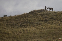 A man stand next to his horse and dogs as he watches the second stage of the Dakar Rally 2015 between the cities of Villa Carlos Paz and San Juan, Argentina, Monday, Jan. 5, 2015. The race will finish on Jan. 17, passing through Bolivia and Chile and returning to Argentina. (AP Photo/Felipe Dana)