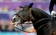 Digby, the horse ridden by Nathalie Zu Sayn-Wittgenstein, of Denmark, leaves the ring after completing their routine in the equestrian dressage competition at the 2012 Summer Olympics, Tuesday, Aug. 7, 2012, in London. (AP Photo/David Goldman)