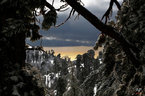 The view of the sea near the coastal city of Limassol is seen in the background through the fir trees after four-days of heavy snow on Troodos mountain, in Cyprus, Thursday, Jan. 8, 2015. Cyprus is in the grip of a mid-winter storm bringing heavy rains, low temperatures and snow in the Troodos mountain range. (AP Photo/Petros Karadjias)