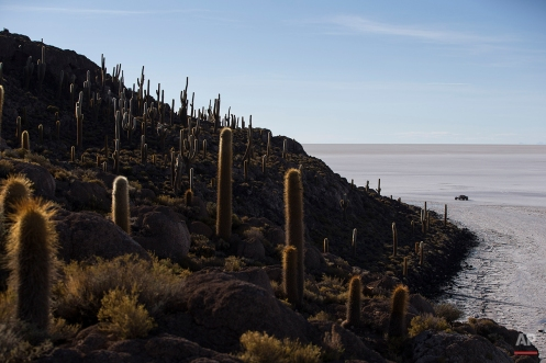 A competitor races past Cactus Island along the Uyuni salt flats during the eighth stage of the Dakar Rally 2015 between Uyuni, Bolivia, and Iquique, Chile, Sunday, Jan. 11, 2015. The race will finish on Jan. 17, passing through Bolivia and Chile before returning to Argentina where it started. (AP Photo/Felipe Dana)
