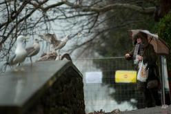 A woman throws a piece of bread to some seagulls, in San Sebastian, northern Spain, Friday, Jan. 30, 2015. (AP Photo/Alvaro Barrientos)