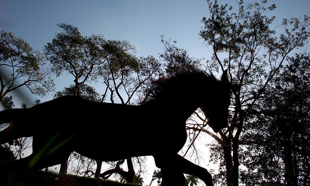 Cuba's Horse Business