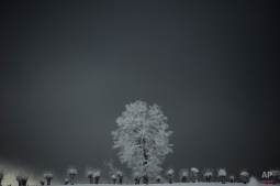 A tree is covered by the ice as the snow covers the landscape in the Pyrenees small town of Roncesvalles, northern Spain, Thursday, Feb. 5, 2015. A cold spell has reached northern Spain with temperatures plummeting far below zero. (AP Photo/Alvaro Barrientos)