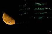 A helicopter flies over New York City as the moon rises near a building seen from Jersey City, N.J., Friday, March 13, 2015. (AP Photo/Julio Cortez)