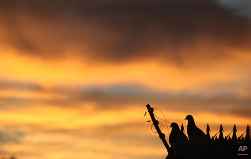 Pigeons watch the sunrise on a wall in a Johannesburg suburb, Tuesday, March 24 2015. (AP Photo/Denis Farrell)