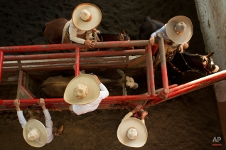 In this Feb. 26, 2015 photo, charros prepare a wild bull to run, as a competitor, right, waits to grab the bull's tail and attempt to flip it, in the steer tailing event at a charreada in Mexico City. (AP Photo/Rebecca Blackwell)