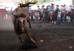 In this March 1, 2015 photo, a wild horse escapes a charro's lasso during the heeling event, in which a charro must catch the horse's back legs with his rope, at a charreada in Mexico City. (AP Photo/Rebecca Blackwell)