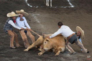 In this Feb. 28, 2015 photo, teammates struggle to lift a bull off the trapped leg of a charro, during the bull riding event at a charreada in Mexico City. (AP Photo/Rebecca Blackwell)