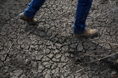In this May 1, 2014 photo, fourth-generation rice farmer Josh Sheppard walks across the dried-up ditch at his rice farm in Richvale, Calif. In Santa Cruz, Calif., dozens of residents who violated their strict water rations take a seat at Water School, hoping to get hundreds of thousands of dollars in distressing penalties waived. California is in the third year of the state's worst drought in recent history. (AP Photo/Jae C. Hong)