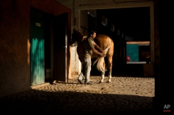 In this Feb. 26, 2015 photo, a stable worker brushes out the tail of a freshly washed charreria horse, after competition, during a charreada in Mexico City. (AP Photo/Rebecca Blackwell)