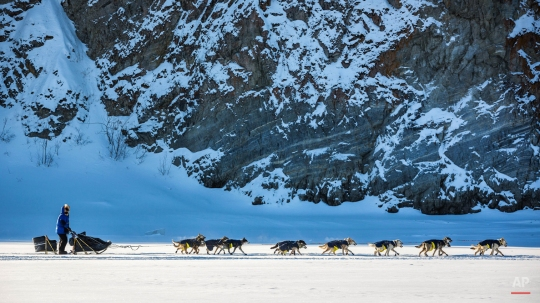 Linwood Fiedler mushes past cliffs on the Yukon River outside Ruby, Alaska, on Thursday, March 12, 2015. A field of 78 mushers began the trek Monday from Fairbanks. Seventy-six teams remain in the race. (AP Photo/Alaska Dispatch News, Loren Holmes)