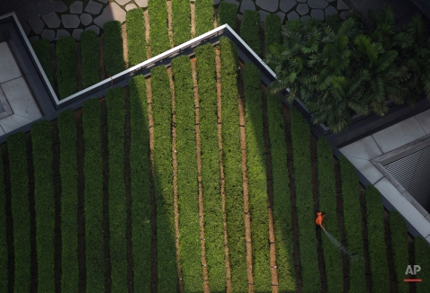 A maintenance worker waters a rooftop garden on a building in the central business district of Kuala Lumpur, Malaysia, Tuesday, March 17, 2015. (AP Photo/Mark Baker)