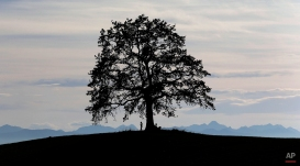 A man rests under a tree in front of the Alps during warm and sunny autumn weather near Muensing south of Munich, Germany, Oct. 12, 2014. (AP Photo/Matthias Schrader)