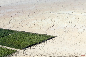In this May 1, 2015 aerial photo, irrigated citrus trees sit surrounded by bone-dry land near Westmorland, Calif. The Imperial Valley's half-million acres of verdant fields end abruptly in pale dirt that gets three inches of rain annually on average. (AP Photo/Gregory Bull)