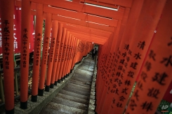 """A visitor walks at a path lined with small shrine arches or """"Torii"""" gates at the entrance of a shrine in Tokyo, June 9, 2015. (AP Photo/Eugene Hoshiko)"""