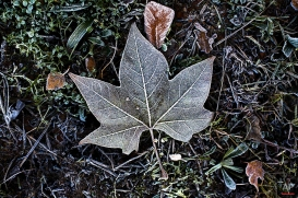 Leaves covered with white frost lay on the ground near the Tiergarten park in central Berlin, Nov. 26, 2013. (AP Photo/Markus Schreiber)