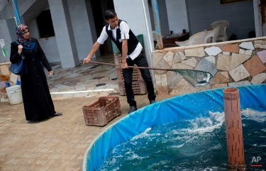 In this Tuesday, June 2, 2015 photo, a Palestinian worker catches Sea Bream fish from a pool for a customer at Fish Fresh, fish farm, in the town of Rafah, southern Gaza strip. (AP Photo/Khalil Hamra)