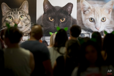 In this Saturday, June 6, 2015 photo, attendees wait in line to look at cats for adoption at CatConLA in Los Angeles. (AP Photo/Jae C. Hong)