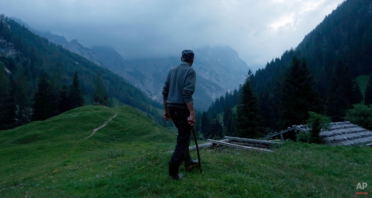 Alpine farmer Josef Wurm watches his cows early in the morning at the alpine dairy Bindalm near Berchtesgaden, southern Germany, on July 11, 2013. (AP Photo/Matthias Schrader)