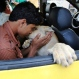 In this Monday, June 15, 2015 photo, Ibrahim Al-Jamal, 17, kisses Max, the male lion cub, while sitting inside a car in Gaza City, in the northern Gaza Strip. Saduldin al-Jamal had bought the cubs from the Gaza zoo, hit during last summer's Israel-Hamas war. His family would take them to parks or the beach and children — those brave enough — would come up to pet them. (AP Photo/Adel Hana)