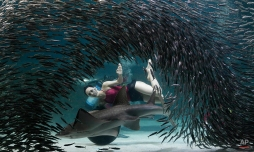 A diver performs with a school of fish at the Coex Aquarium in Seoul, South Korea, July 29, 2015. (AP Photo/Ahn Young-joon)
