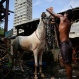 """In this June 16, 2015 photo, a horse gets his morning bath from groom Shakeel at a stable in Mumbai, India. Drivers of Mumbai's iconic horse-drawn carriages can't imagine not plying the roads pulling photo-snapping tourists atop their kitsch-covered chariots. Yet that time is coming, thanks to a court order calling such superfluous """"joyrides"""" a form of animal cruelty and banning them in India's financial capital from June 2016. (AP Photo/Rafiq Maqbool)"""