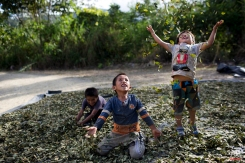 """In this March 13, 2015 photo, Yohan, 4, from left, Cristian, 7, and Angelo, 6, playfully toss coca leaves into the air, singing: """"I have a lot of money, look at all the money I have,"""" in La Mar, province of Ayacucho, Peru. Hauling cocaine out of the remote valley is about the only way to earn decent cash in this economically depressed region where a farmhand earns less than $10 a day. Beyond extinguishing young lives, the practice has packed Peru's highland prisons with cocaine backpackers while their bosses evade incarceration. (AP Photo/Rodrigo Abd)"""