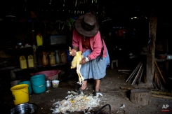 """In this March 15, 2015 photo, Rufina Miguel plucks a chicken in preparation for a special dinner to mark the second anniversary of her son's death, in La Mar, province of Ayacucho, Peru. Yuri, a cocaine backpacker, always checked in by phone she said. So when he didn't call after a March 2013 smuggling trip, his mother turned to reading coca leaves to try to divine his fate, tossing them on her skirt as is customary. """"The leaves fell spine-up, a bad sign,"""" she said. (AP Photo/Rodrigo Abd)"""