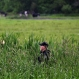 A law enforcement officer walks through a swampy area searching for escaped prisoners near Essex, N.Y., Tuesday, June 9, 2015. (AP Photo/Seth Wenig)