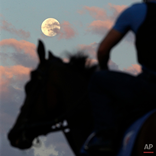 Race horses walk on the track under a bright moon in the early morning at Monmouth Park in Oceanport, N.J., Saturday, Aug. 1, 2015. The track will host Sunday's running of the Haskell Invitational horse race. (AP Photo/Mel Evans)