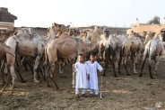 Two boys pose for a portrait during an auction at Birqash Camel Market just outside of Cairo, Egypt, Friday, Sept. 18, 2015 ahead of next week's Eid al-Adha holiday. Muslims all over the world celebrate the three-day festival Eid al-Adha, by sacrificing sheep, goats, camels and cows to commemorate the willingness of the Prophet Ibrahim (Abraham to Christians and Jews) to sacrifice his son, Ismail, on God's command. (AP Photo/Mohammed El Raai)