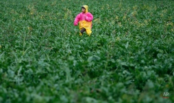 A migrant child runs through field on no man's land at the Sid border crossing between Serbia and Croatia near Sid, about 100 km west from Belgrade, Serbia, Thursday, Sept. 24, 2015. Tensions escalated between Serbia and Croatia on Thursday as the long-time foes struggled to come up with a coherent way to deal with tens of thousands of migrants streaming through the Balkan nations to seek sanctuary in other parts of Europe. (AP Photo/Darko Vojinovic)