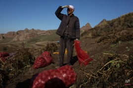 A Hui ethnic minority farmer looks up from harvesting potatoes on farmland in Guyuan, in northwestern China's Ningxia Hui autonomous region Friday, Oct. 9, 2015. Potato crops are common in the arid region due to its drought resistant properties. (AP Photo/Ng Han Guan)