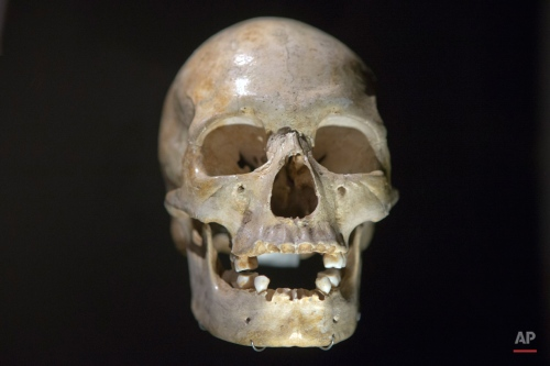 The 22000 years old skull of an Homo Sapiens called The woman from Pataud, Dordogne France, is displayed during a press visit at the Museum of Mankind (Musee de l'Homme) in Paris, France, Wednesday, Oct. 14, 2015. Among the thousands of objects and artifacts include the skull of Neanderthal man and of a French philosopher Rene Descartes, the museum, dedicated to anthropology, ethnology and prehistory of human evolution, will open to the public this weekend after six years of renovation. (AP Photo/Francois Mori)