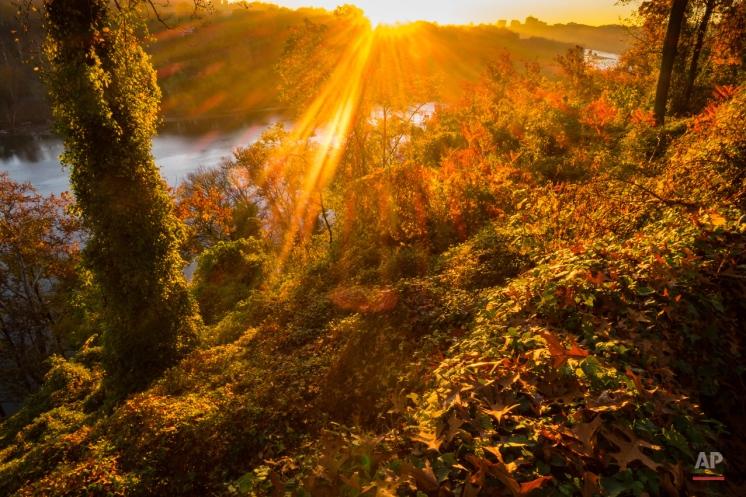 The sun streaks through the fall foliage at sunrise along the Potomac River in Arlington, Va., Wednesday, Nov. 4, 2015 on a warm fall day in the nation's Capitol area. (AP Photo/J. David Ake)
