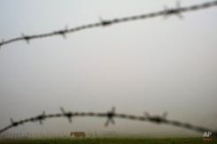 A horse stands in a field as fog covers the landscape on an autumn morning, in La Magdalena, near to Pamplona, northern Spain, Monday, Nov. 9, 2015. (AP Photo/Alvaro Barrientos)